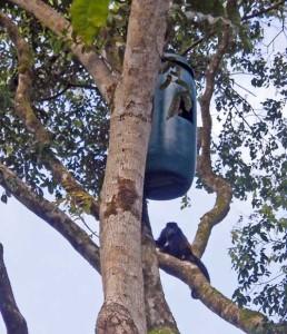 NEst Box Project Osa Peninsula Scarlet Macaws