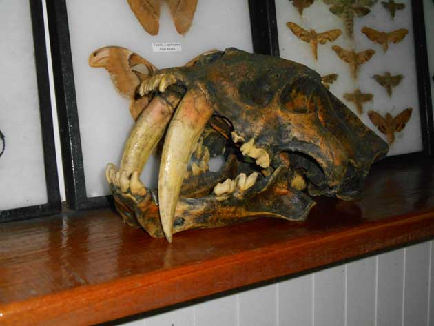 Scull_Museum_2