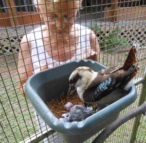 Rubyann with Kookaburra and Offspring
