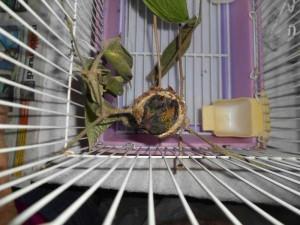 Hummingbirds_patrick