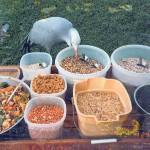 birdfood2