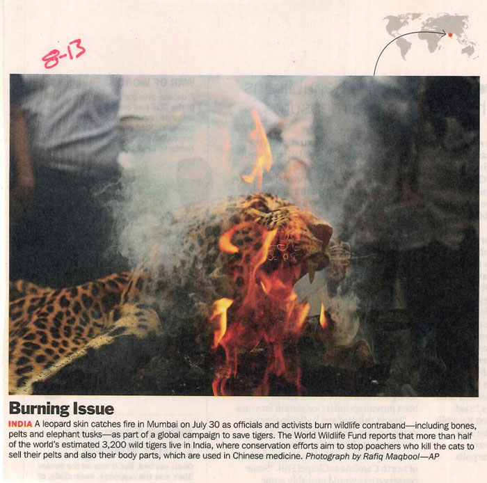 burningissue-jaguar