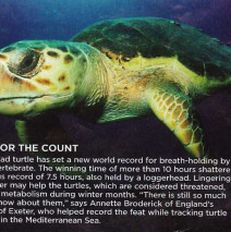 Down for the Count – Turtles