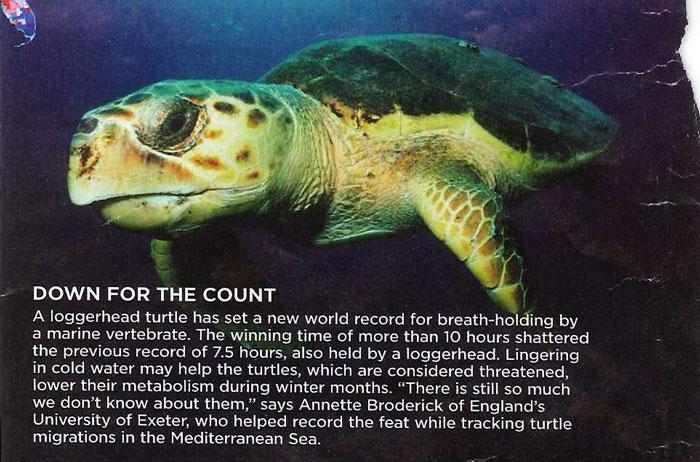 turtles_patrick